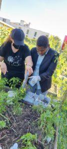Implantation du capteur WAOU dans le jardin, le 13 AOUT 2021